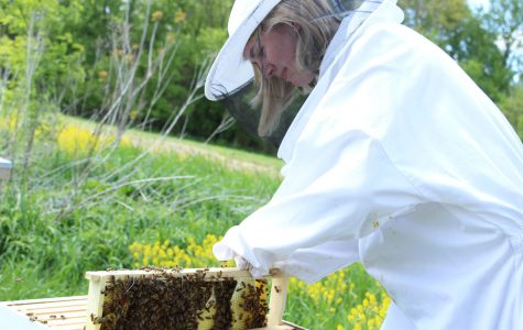 Honey, we have a bee problem