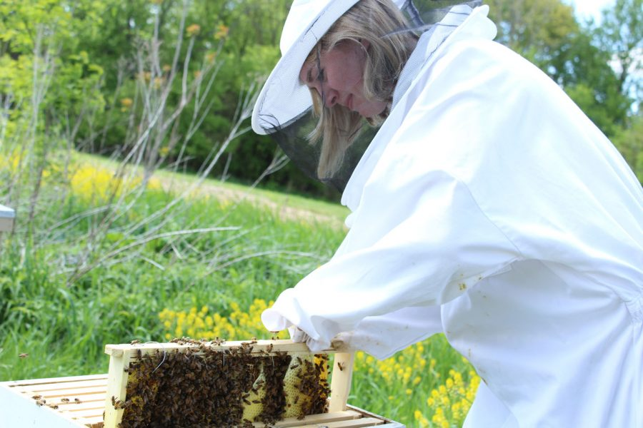 Honey%2C+we+have+a+bee+problem